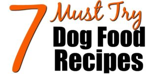 7 Must Try Dog Food Recipes to Keep Fido Healthy… and Save You Money