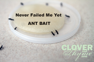 get-rid-of-ants-naturally