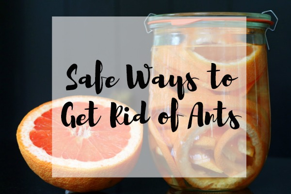 Safe Ways to Get Rid of Ants
